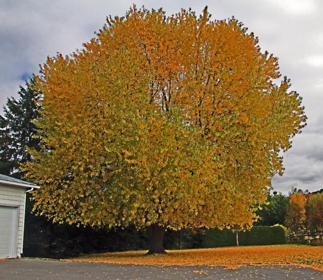L'arbre de sagesse. 15-10-18.jpg